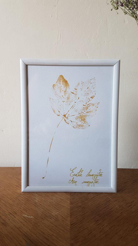 Herbier - Érable champêtre