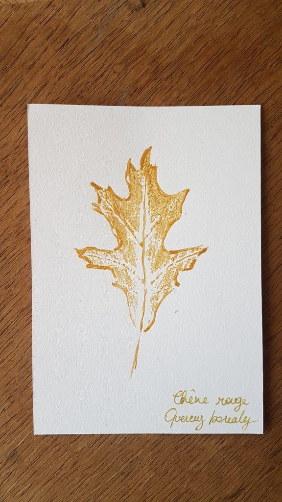 Herbier - Chêne des marais